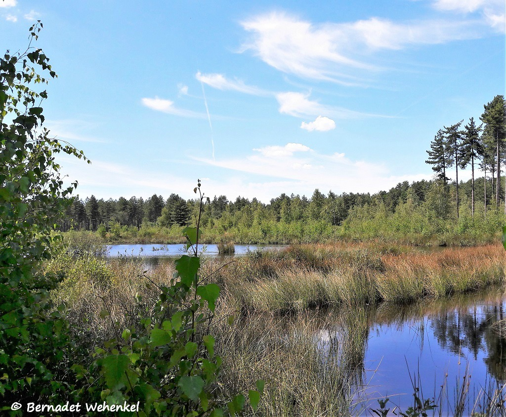 Enkele mooie vennen in natuurgebied Averbode Bos en Heide.