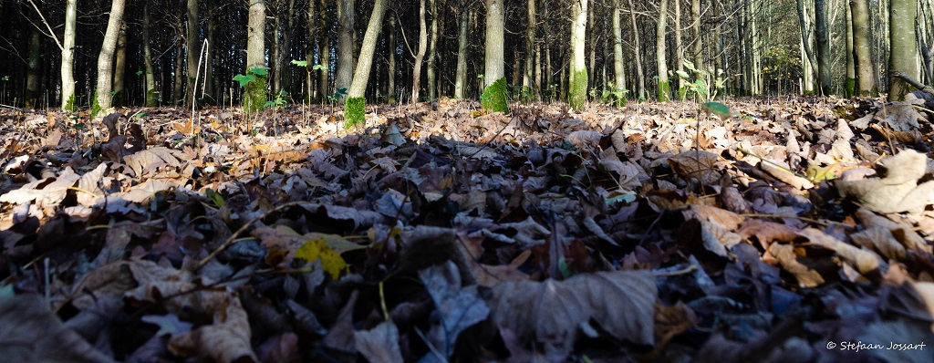 Verrassende Blogwandeling in Herkenrodebossen
